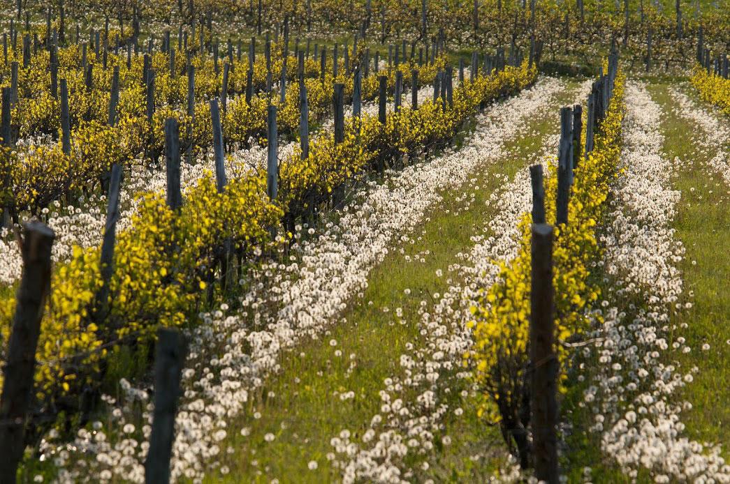Quoi faire dans les vignoble en mai et juin